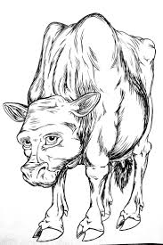 13 best cartoon drawings bovines cattle cows and bulls images