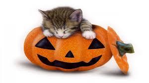 cute pumpkin wallpaper cute pumpkin halloween id 90207 u2013 buzzerg
