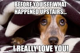 Hilarious Dog Memes - 50 funny dog memes you need to see