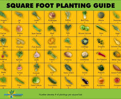 keyhole garden layout first vegetable garden layout square foot square foot planting