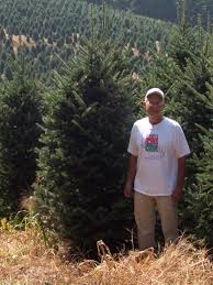 christmas tree farms colorado christmas lights decoration