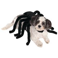 spider dog costume the animal rescue site