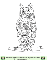 great horned owl coloring page murderthestout