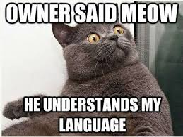 Cats Memes - 14 cat memes that will help you celebrate the best day of the year