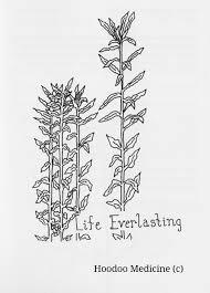 native american medicinal plants home u2014 hoodoo medicine