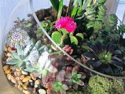 terrestrial terrariums wallace gardens