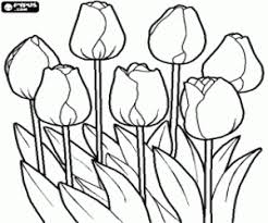 flowers coloring pages flowers coloring book flowers printable