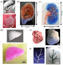 bioengineering free full text 3d printing of organs on chips