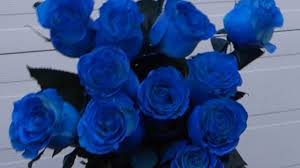 blue roses how to make blue roses