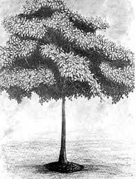 drawings of trees with leaves beatiful tree