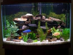set up fish tank decoration ideas fresh water aquariums normal