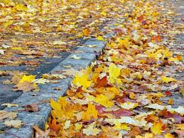 thanksgiving weather forecast in maryland chances for