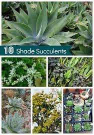 shade succulents drought tolerant garden guide install it direct