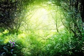Deep Forest Green Deep Forest Light Wallpaper Wall Mural Wallsauce