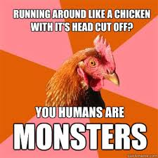 Chicken Running Meme - running around like a chicken with it s head cut off you humans