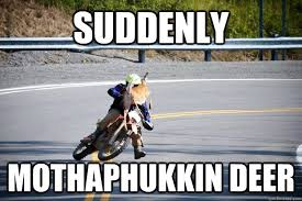 Funny Deer Memes - suddenly mothaphukkin deer deer hunter quickmeme