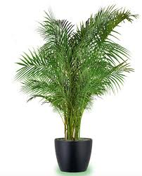 18 best large indoor plants houseplants for home and