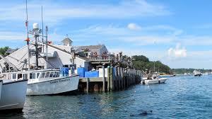 seals u0027 comeback spells sharks and trouble to massachusetts coast npr