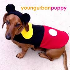 Halloween Costumes Miniature Dachshunds 18 Pet Halloween Costumes Images Animals