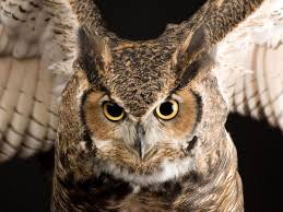 eerie animal pictures animal wallpapers national geographic