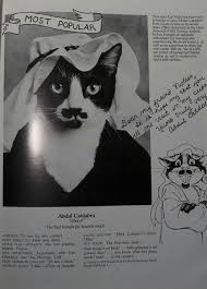 cat yearbook cat high the yearbook the name s ponyboy
