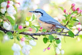 free photo nature bird bird blue flowering tree