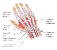Human Anatomy Upper Body Upper Body Muscle Diagram Human Anatomy Chart