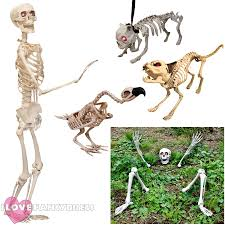 life size skeleton prop decoration halloween fancy dress party