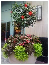 Summer Container Garden Ideas 338 Best Summer Planters Images On Pinterest Beautiful Gardens