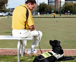 guide dog harness learn about the guide dog program guide dogs wa