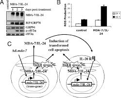 autocrine regulation of mda 7 il 24 mediates cancer specific apoptosis