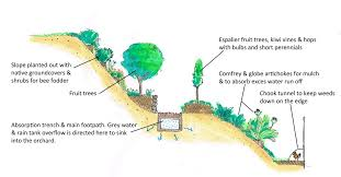 Backyard Orchard Layout Author S Rendering Of The Fruit Garden My - Backyard orchard design