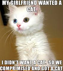 Cats Memes - funny cute angry cat memes collection for friends family