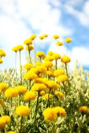 Color Yellow 76 Best Color Schemes Lemon Yellow Flirt Color Palette Images On