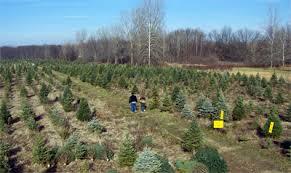 best tree farms near detroit cbs detroit