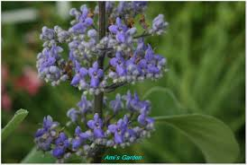 Tropical Fragrant Plants - southeast florida garden evolvement another fragrant plant in my