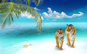 wallpapers tigers on a tropical wallpaper beaches