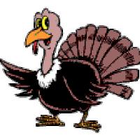 turkey find make gfycat gifs