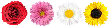 houston florist s day flower meanings from your best houston florist