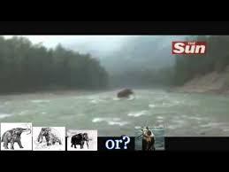 woolly mammoth extinct worldnews