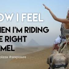Camel Memes - sexposure stereolizza