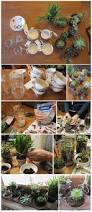 58 best succulents images on pinterest succulents garden
