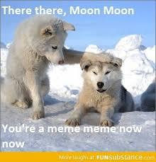 Moon Moon Meme - moon moon is a meme meme on imgfave
