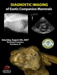 diagnostic imaging of exotic companion mammals pdf download