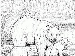100 black bear coloring page polar bear 23 coloring page free