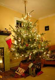 www this douglas fir is transformed into a decorated live potted