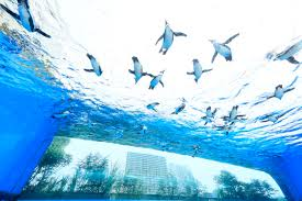 watch penguins fly over the city of tokyo at this unique aquarium