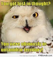 Funny Owl Meme - 19 sarcastic owl meme pmslweb