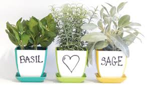 Window Sill Herb Garden Designs Windowsill Herb Garden Kit Roselawnlutheran