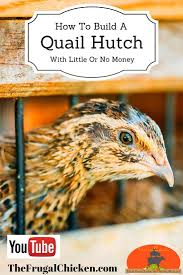 Build A Hutch Build A Quail Hutch With Little Or No Money Video Tutorial